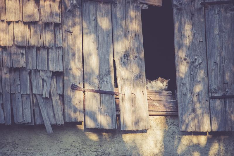 Кот в старом сельскохозяйственном строительстве наслаждается вечером стоковые изображения
