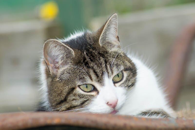Кот в тачке стоковые изображения