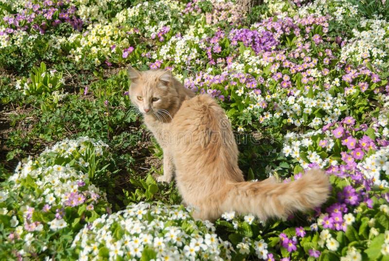 Кот в траве стоковая фотография