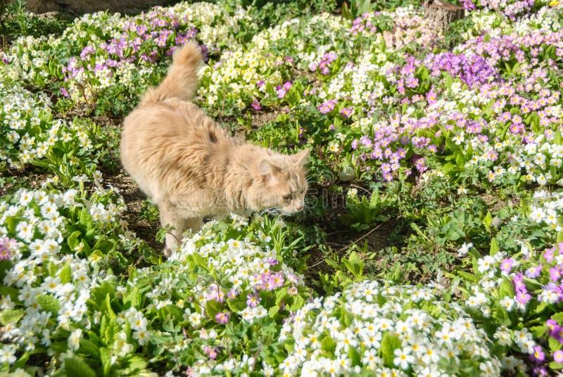 Кот в траве стоковое изображение rf