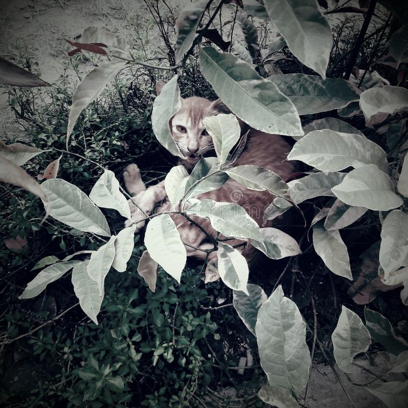 Кот в утре стоковая фотография