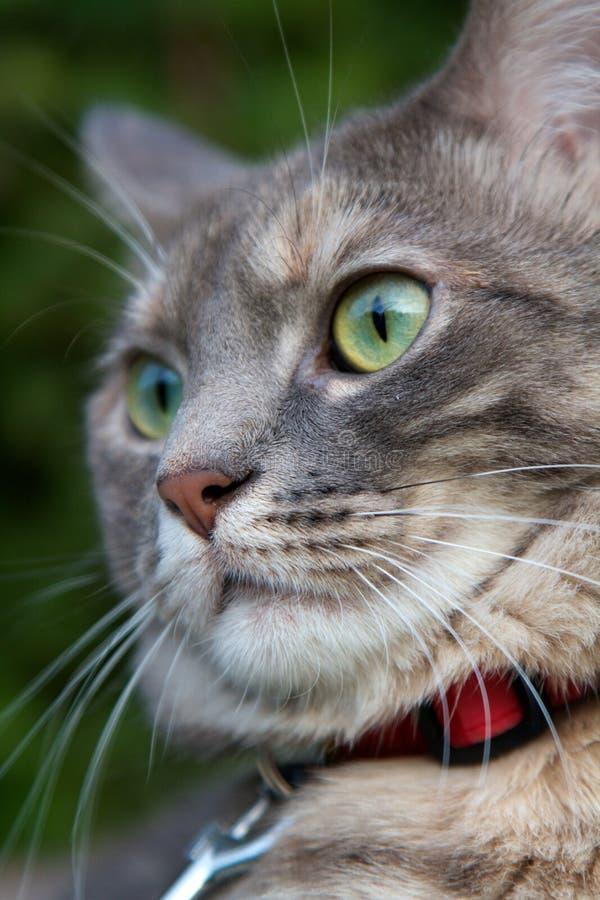 Кот в фокусе стоковое изображение rf