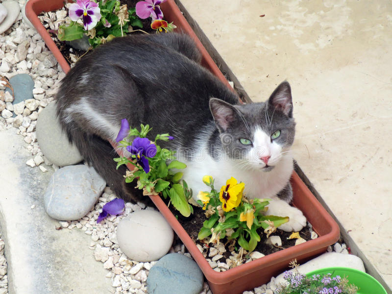 Кот в цветочном горшке стоковые изображения rf