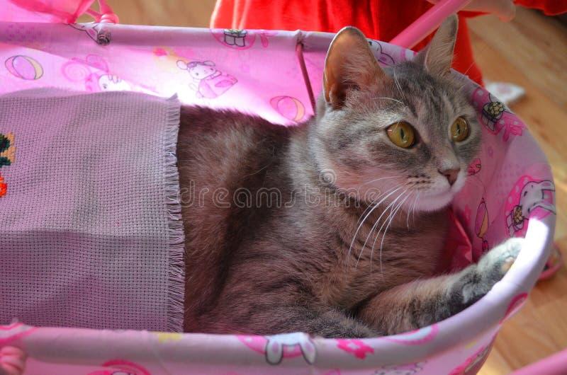 Кот в pram стоковое изображение