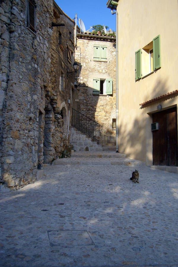 Кот в Sainte Agnés стоковые фото