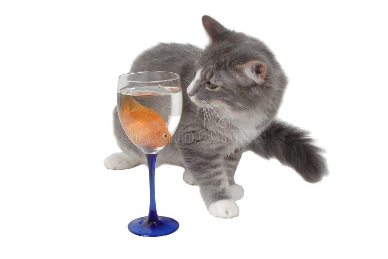 Download кот голодный стоковое фото. изображение насчитывающей конец - 482636