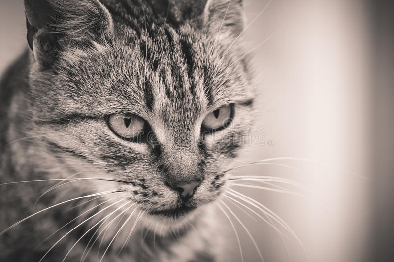 Кот готовый для охоты стоковая фотография