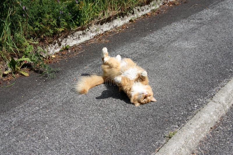 Кот греется в солнце с удовольствием стоковое изображение rf