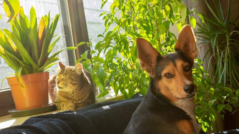 Кот греет на солнце на windowsill с собакой стоковые изображения