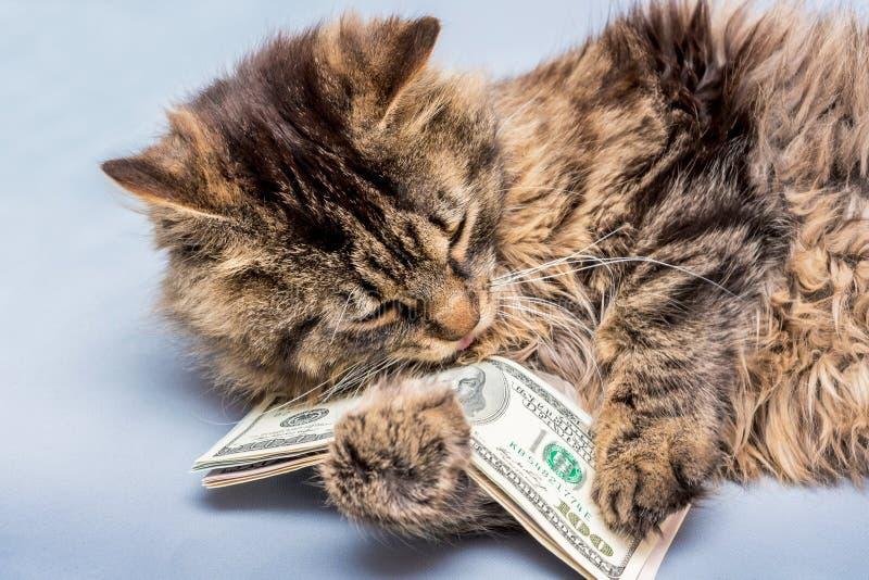 Кот держит в долларах лапок Богатство в нашем hands_ стоковое изображение