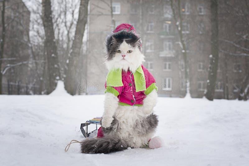 Кот для прогулки стоковые изображения