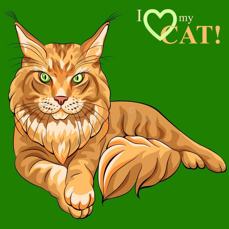 Кот енота Мейна эскиза цвета вектора пушистый иллюстрация штока