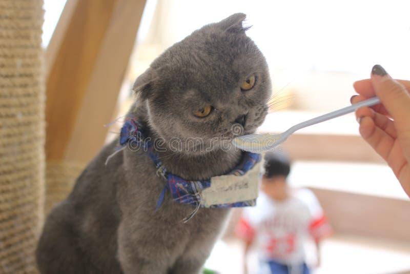 Кот ест от ложки стоковые изображения
