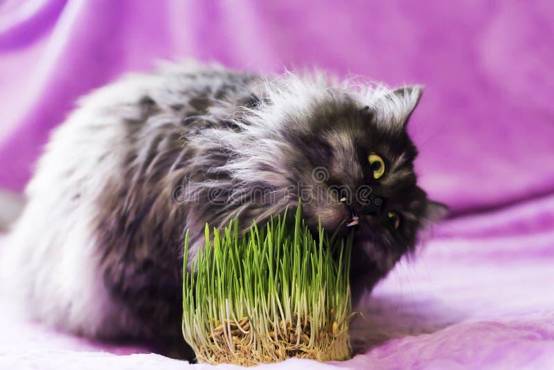 кот ест траву стоковые фото