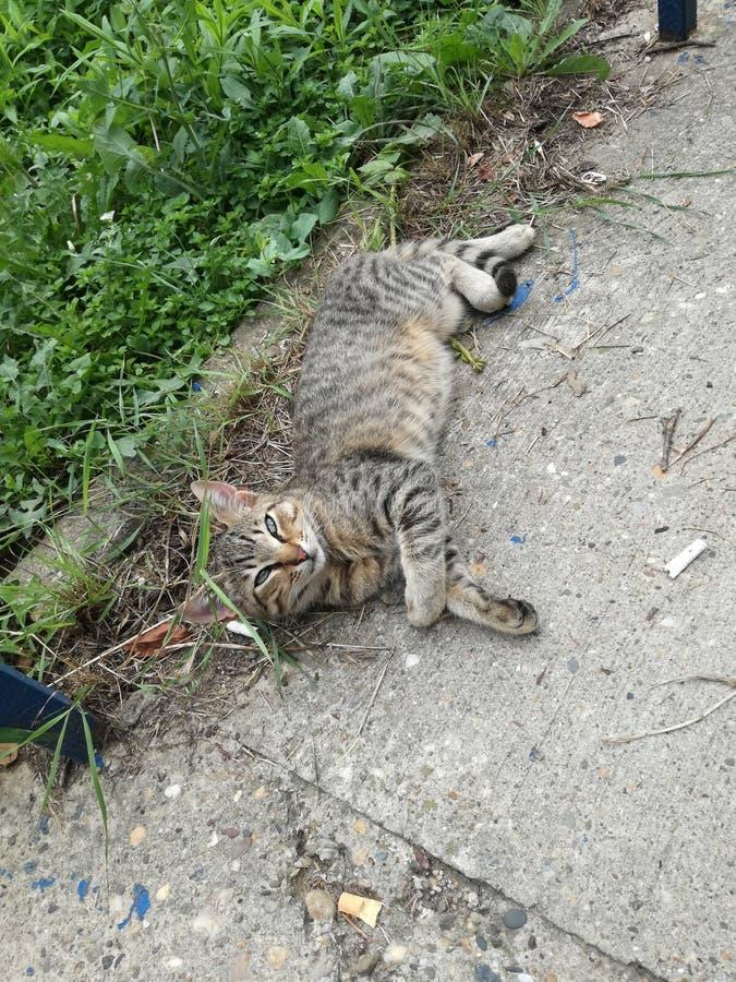 Кот заботы любимчика на поле стоковое изображение