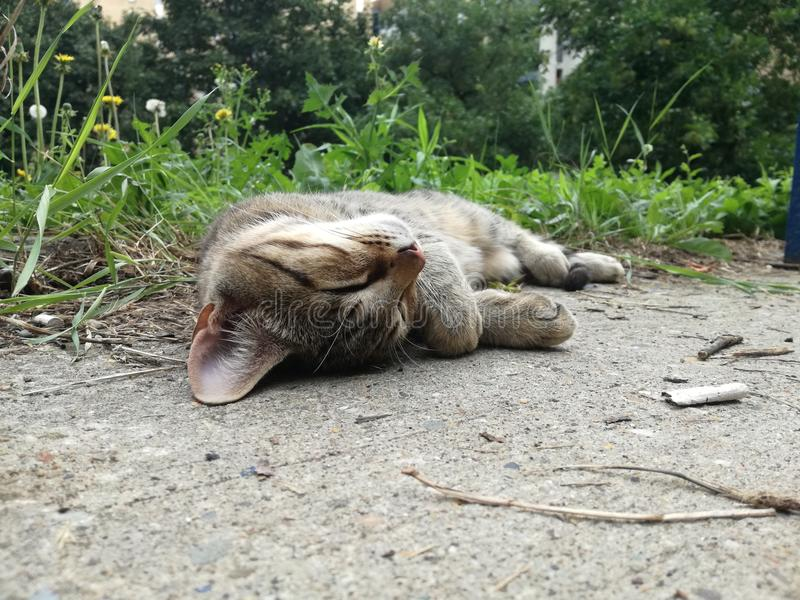 Кот заботы любимчика спать на поле стоковое изображение rf