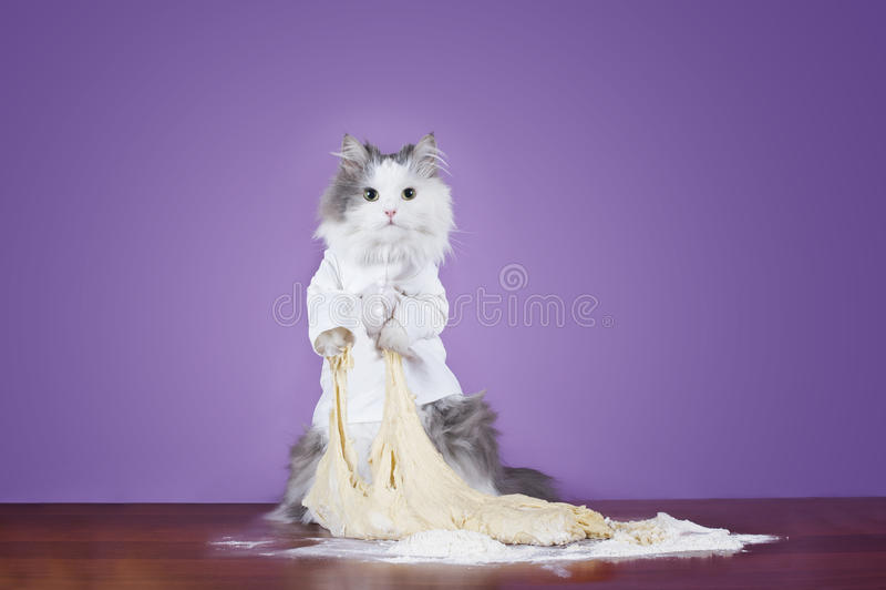 Кот замешивает тесто в шеф-поваре костюма стоковое изображение rf