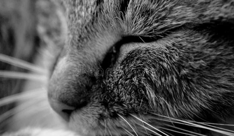 Кот, затишье, сон, конец-вверх, остатки стоковые фото