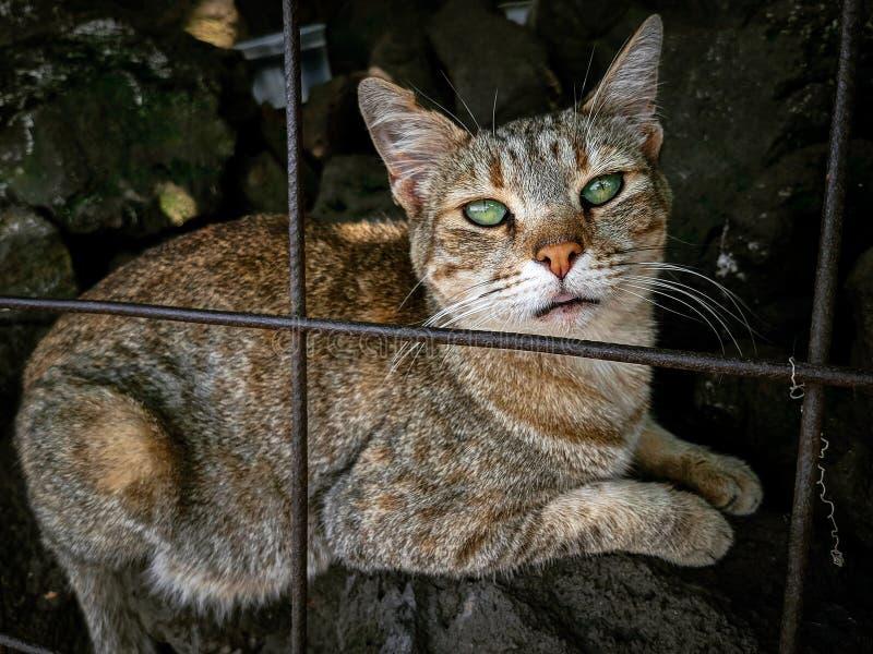 Кот за решеткой стоковое фото