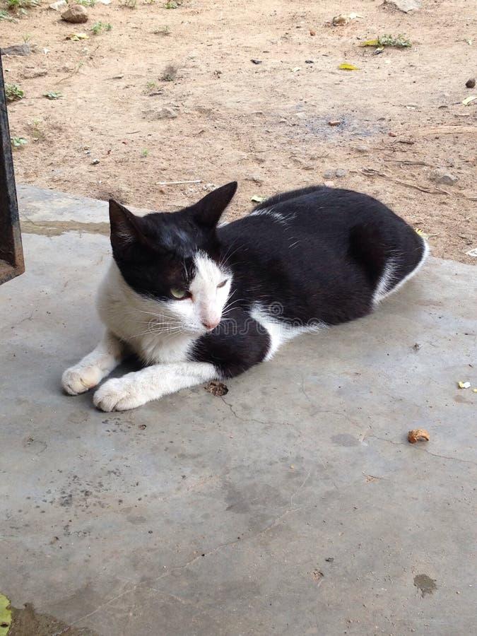 Кот звероловства стоковая фотография