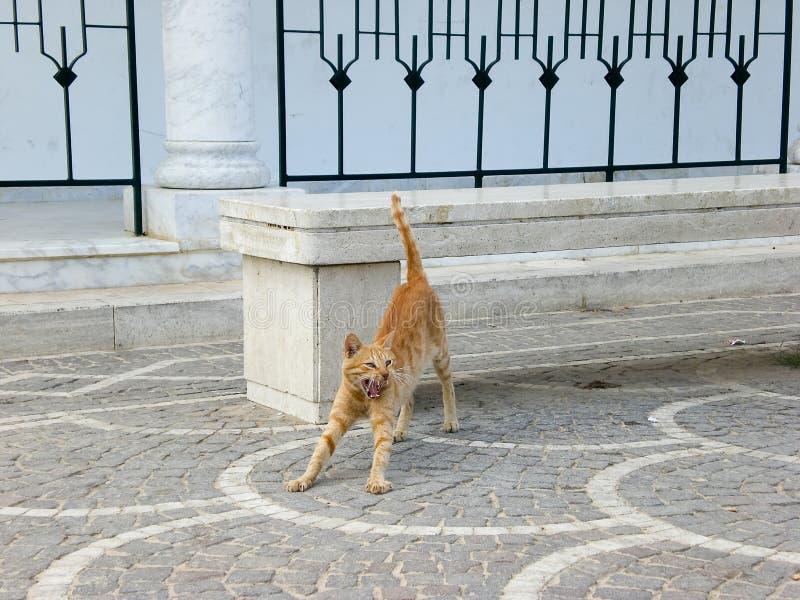 Download кот зевая стоковое изображение. изображение насчитывающей yellow - 6869821