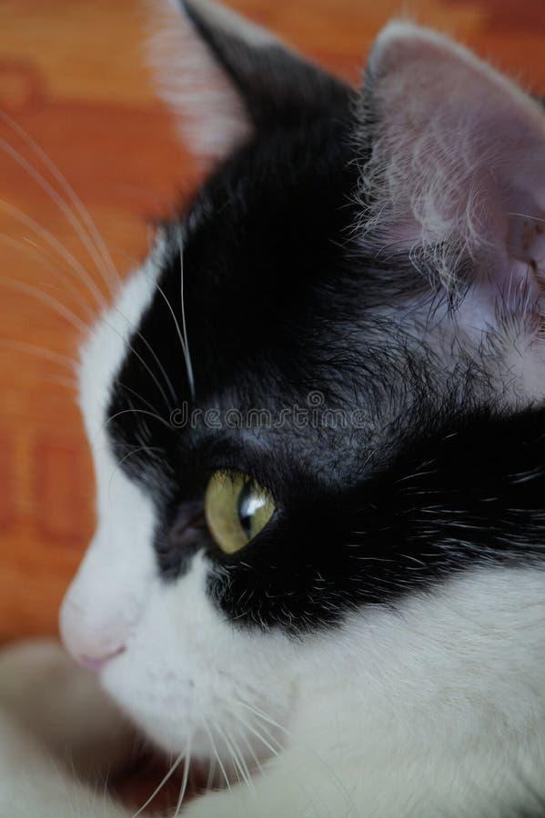 Кот Зеленые глаза стоковые фото