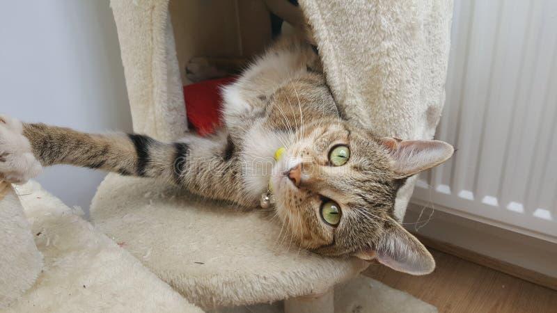 Кот играя на царапать столб стоковое фото rf