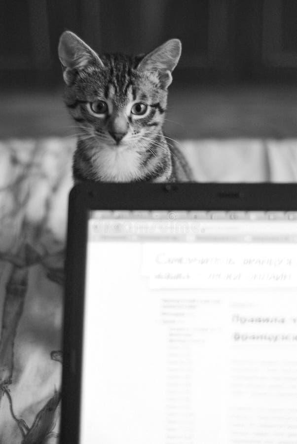 Кот играя с тетрадью стоковые фотографии rf