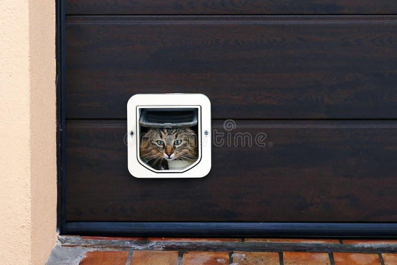 Кот идет через щиток кота стоковые изображения