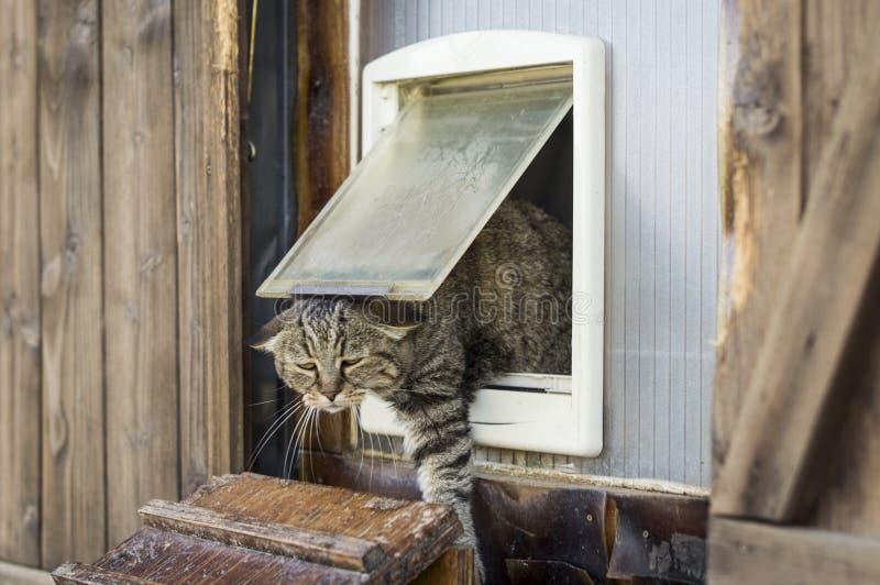Кот избегает от двери кота, славной сцены стоковые фотографии rf