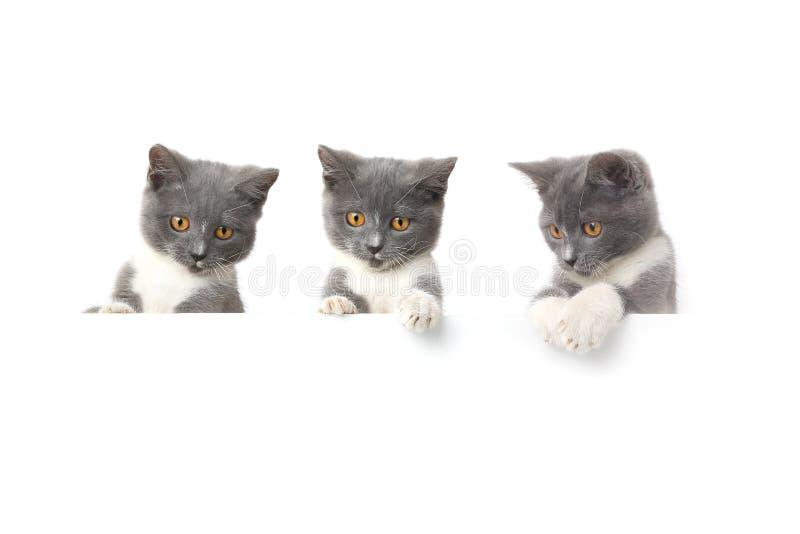 Кот 3 изолированный на белой предпосылке стоковые фото