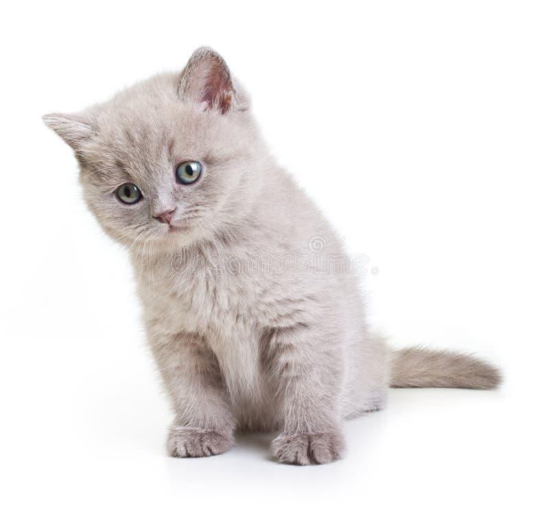 Кот изолированный на белой предпосылке. стоковые изображения rf