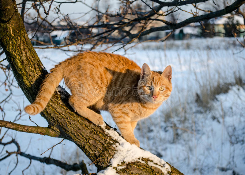 Кот имбиря в снеге стоковые изображения
