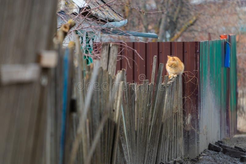 Кот имбиря на деревянной загородке стоковые изображения