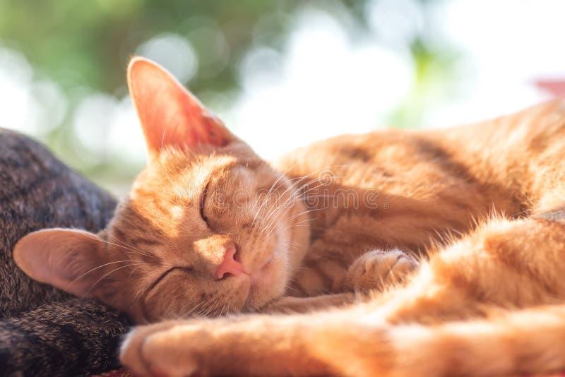 Кот имбиря спать дома стоковые фотографии rf