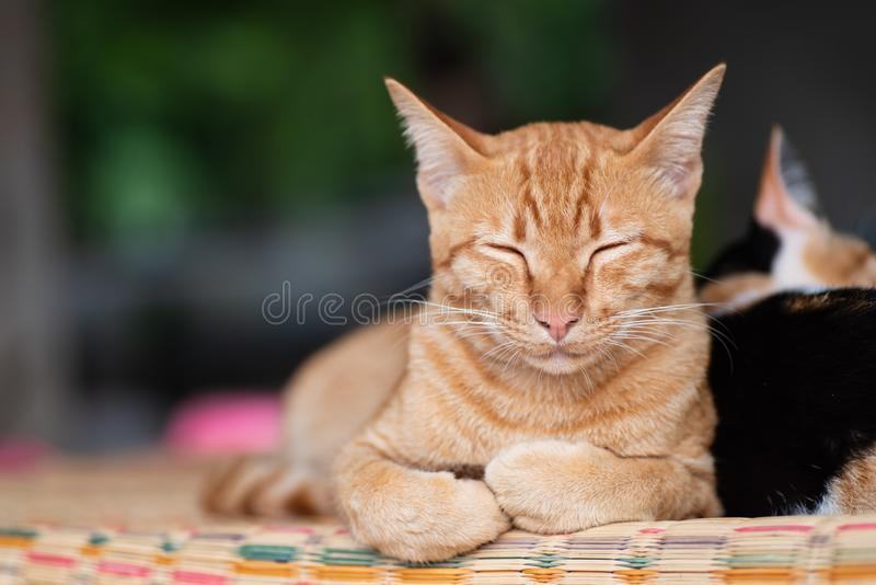 Кот имбиря спит на циновке стоковое изображение rf