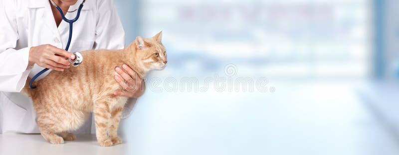 Кот имбиря с зооветеринарным доктором. стоковые фото