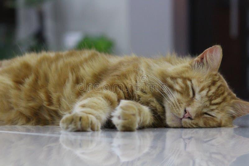 Кот имбиря стоковые фото