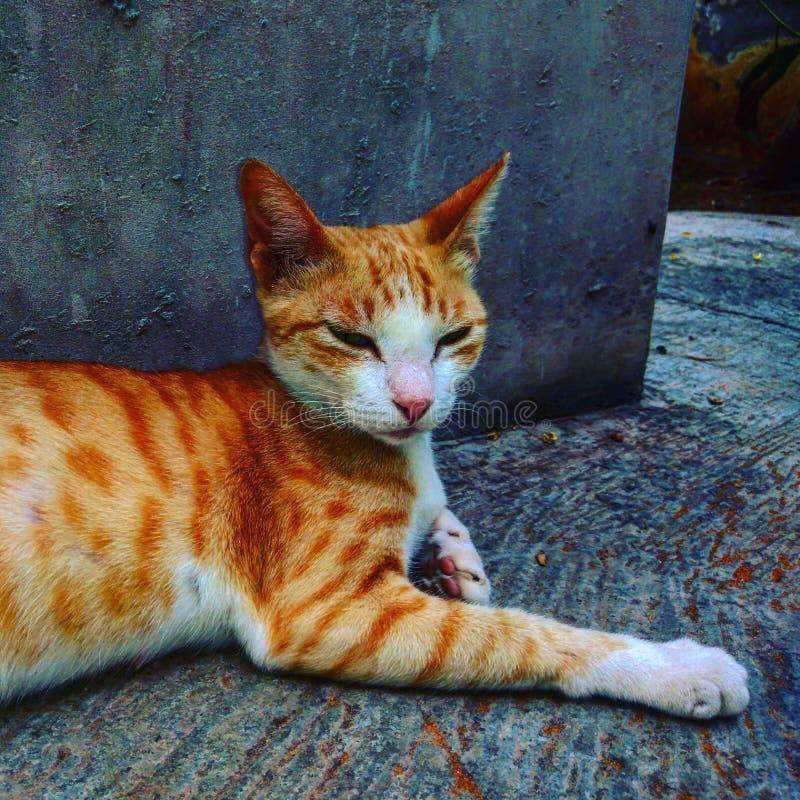 Кот имеет больший взгляд чем нас стоковые изображения rf