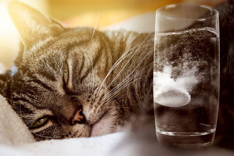 Кот имеет похмелье стоковое фото rf