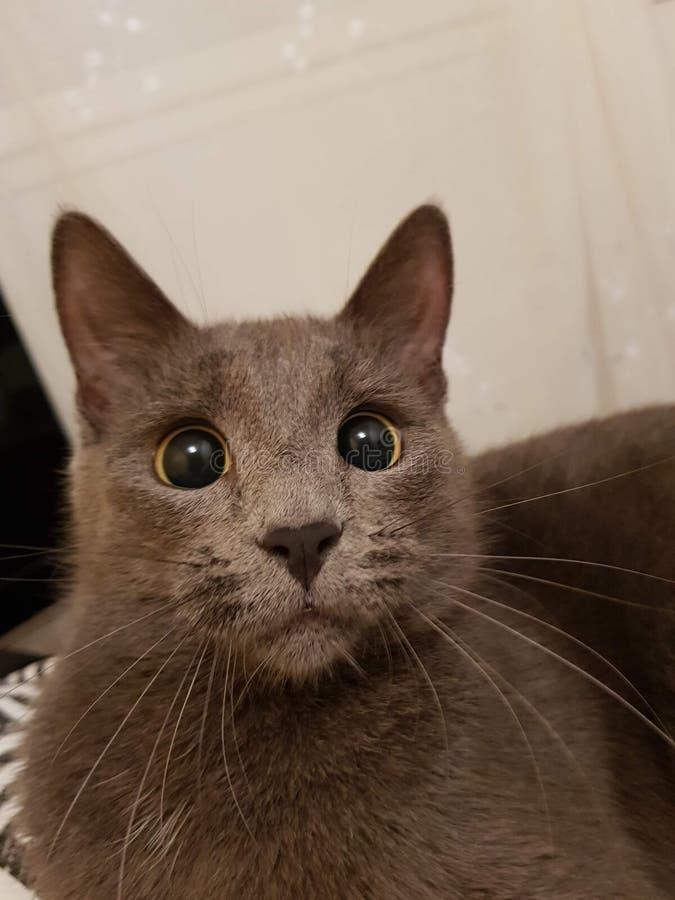Кот имея смешной взгляд стоковое изображение