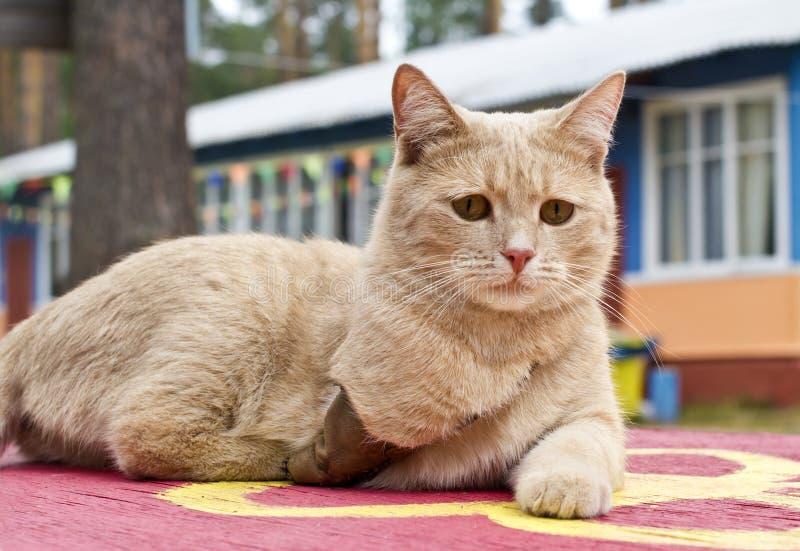 кот инвалидный стоковая фотография rf