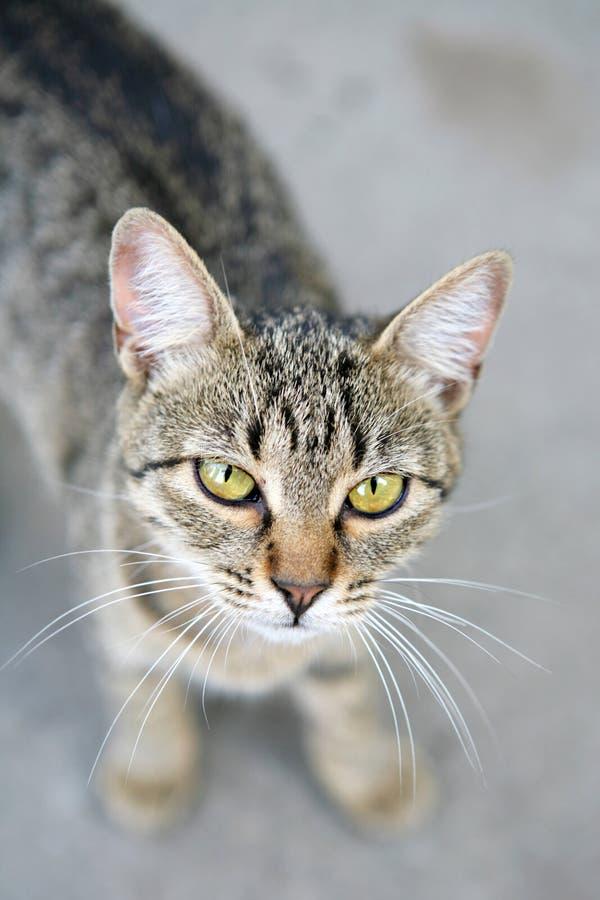кот интересный стоковая фотография rf