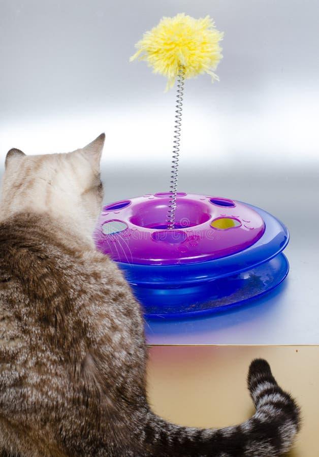 Кот и игрушка стоковая фотография