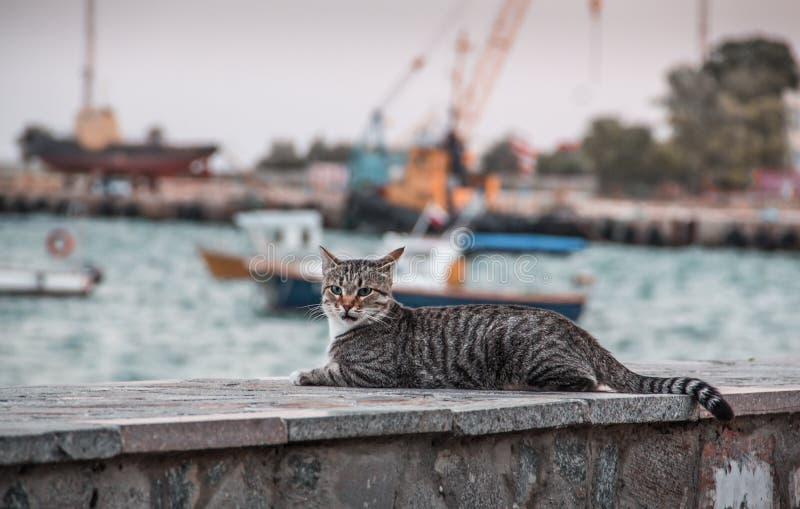 Кот и корабли стоковое изображение