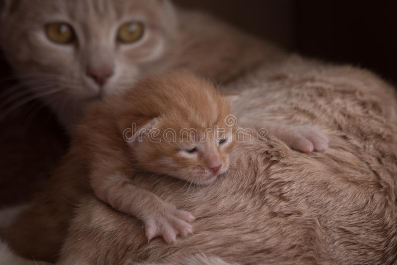 Кот и котята матери стоковое изображение rf
