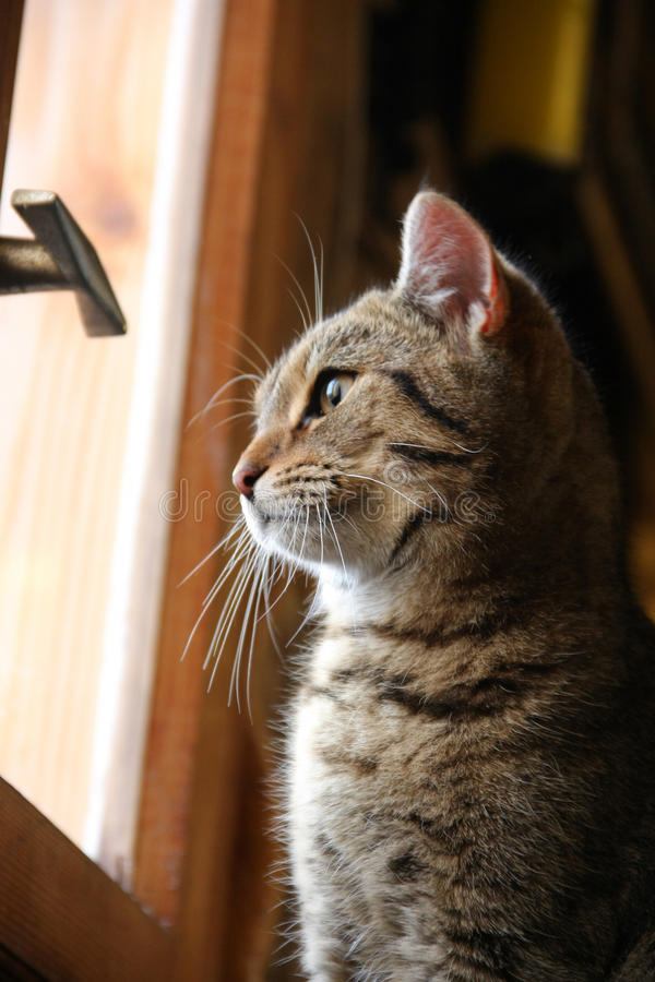 Кот и окно стоковые изображения rf