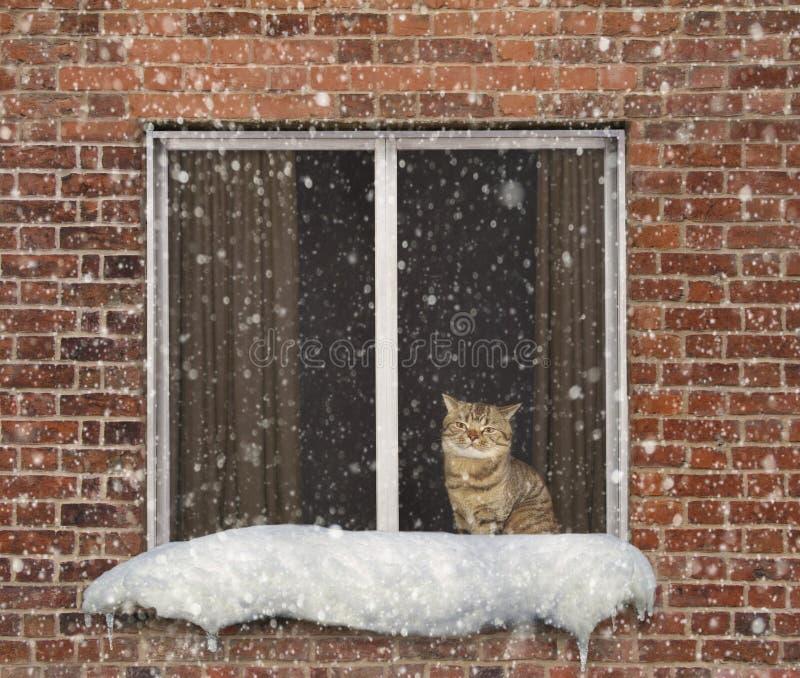 Кот и окно стоковые изображения