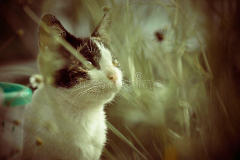 Кот и природа стоковые изображения