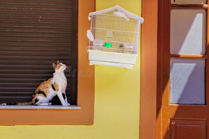 Кот и птица стоковые изображения